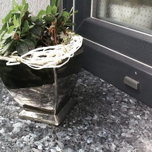 roślinka na parapecie